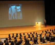 動物福祉・愛護の論文や就職などアドバイスします 国内外のアニマルシェルターや動物愛護について知りたい方へ