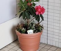 植物、緑で安らげる空間作りのご相談致します 1級技能士の資格を持つガーデンアドバイザーがご相談致します