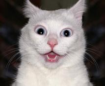 気になる彼の気持ちを教えます ★☆ビックリする程当たる白猫タロット占い☆★