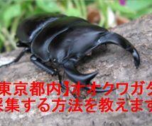 都内)オオクワガタの生息地を簡単に探す方法教えます 東京都内でオオクワガタを採集したいあなたに