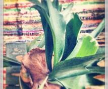 あなたの部屋にぴったりな植物教えます