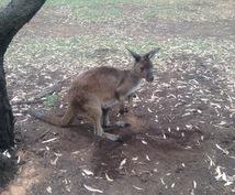 ワーホリでオーストラリアへ!!ご相談承ります ビザってどう取るの??滞在初期にするべきことは?などなど