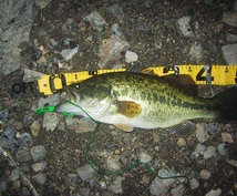 【釣りを始めたい人、もっと釣りたい人へ】基本に立ち返った「釣れるヒント」を提供します。