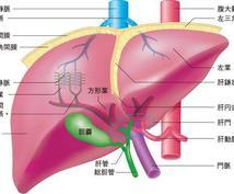 看護師国家試験における臓器別解剖生理学を指導します 苦手な臓器を克服して国家試験に合格しましょう!