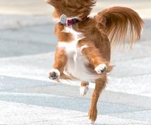 ブログで使える犬のフリー画像50枚を集めます 様々なシチュエーションに対応!!可笑しい!可愛い!!犬の画像