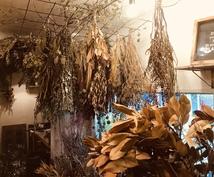観葉植物の育て方を樹種により詳しくご説明します 樹種によって特性(暗さに弱いなど)は全然違う!!