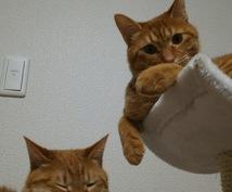 猫の画像売ります!
