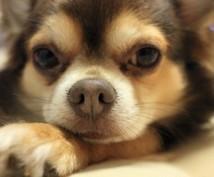 ペットの気持ちリーディングます 霊感鑑定・きになるペットの気持ちのリーディングします!