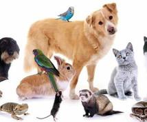 あなたのペットに合う、健康的ペットフードを選びます ペットの健康を意識し始めたら!種別・年齢・健康状態から選定!