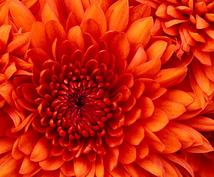 御指定の花言葉の花を探します