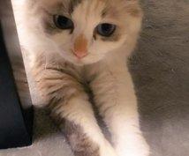 猫をリアルタイムで観察しながら抱き方など学べます 子猫のらる、お姉さん猫ナナ、気まぐれめる、ぽっちゃり猫ふー