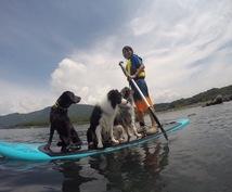 愛犬との絆を深める為のドッグトレーニングをします 愛犬と共に暮らしている全ての方へ