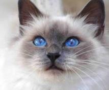 行方不明の猫 家出猫の探し方アドバイスします 愛猫探しを絶対諦めたくない方プロの捜索技伝授します