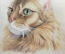 ペットの絵を描きます【手書き・色鉛筆】