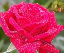 女神アフロディーテの愛のエネルギーを伝授します 愛のエネルギーアチューメントで、幸せな恋愛結婚を呼び込みます