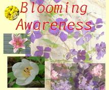 貴方を象徴する花をリサーチします 詩的に表現すれば、、、花の精の力で魅力を高めることです
