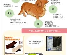 シニア犬の介護・ケアに関するご相談受け付けます シニア犬との生活のお悩み相談、寝たきり予防エクササイズも♪