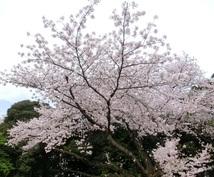 下克上受験の桜葉学園合格へのテクニック教えます 中学受験中のお子さんを持つ方へ