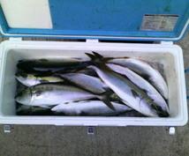 釣った魚を売ります 居酒屋さん、魚屋さんなど、その季節に釣る魚を売りたいです!