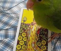 かわいい小鳥が占います 小鳥とアニマルコミュニケーターの占師によるカード占い