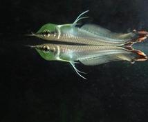 熱帯魚の飼育の仕方など教えます。