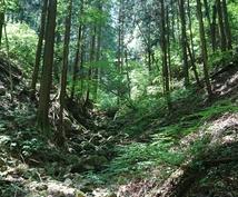 奥多摩へ、裏高尾の日帰り登山ご相談にのります 奥多摩、高尾山、南高尾、裏高尾の日帰り登山のご相談にのります
