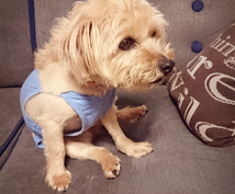 上手な犬のしつけ方を伝授します 可愛い愛犬が家族になり、新しく穏やかな生活を迎えるために☆