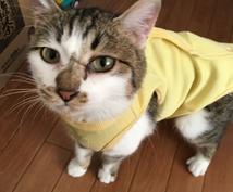 猫飼育歴25年が今更聞けないアレコレ教えます 基本的な事から、保護猫を迎えたい、捨て猫を拾った⋯などなど!