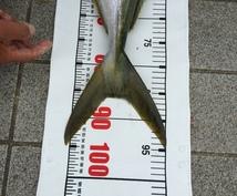 ショアから大物を狙える仕掛けを教えます 青物シーバスなどルアー餌なんでも釣りたい方オススメです