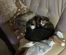 猫の飼い方がよくわからない貴方の助けに