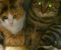 猫ちゃん飼いたいあなたへいやします 猫大好きなひで飼えない人あなたへ