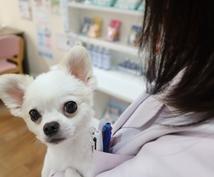 現役10年臨床獣医師の お悩み相談室 開催します これって病気?と気になる方へ 病院に行くか迷った際はこちらに