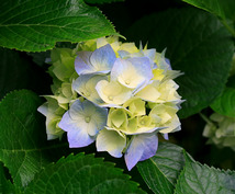 花粉症に効くアロマテラピー