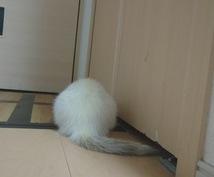 小動物について納得するまで相談に乗らせて貰います 小動物の飼育を真剣に考えてる方へ