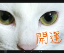 開運!招き猫の開運祈願!