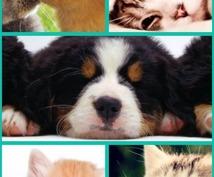 アニマルコミュニケーション♡モニター募集してます 愛する動物さんの気持ちを聞いて、より良い関係を作りましょう!