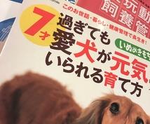 現役動物業界の人間がペットの悩み相談お答えします 誰にも言えず困ってませんか?真意になんでも相談のりますよ☆