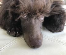 ご愛犬の健康・病気・お悩み・相談受付ます フード・健康状態・しつけ・美容、何でも気軽にご相談ください!