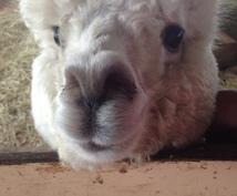 動物業界に入りたい方へ飼育員になりたい方