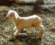 未来への幸福を手に入れる占いをします 悩みを抱える子羊の未来を、私が占いで良い未来に変えましょう