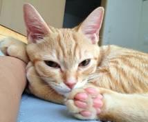 猫の行動心理~しぐさ・言動20選~教えます 猫を飼い始めの方・これから猫を飼って猫と分かり合いたい方