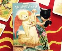 幸運の白猫タロットが出会いを運びます 半年間の恋愛運と対策で恋愛力アップリーディング!