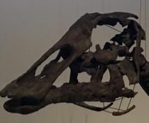 恐竜に関する勉強・論文の読み方・探し方を相談します 恐竜好きな方に向けた勉強相談や論文の読み方をサポートします!