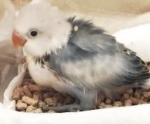 小鳥と仲良くなる方法!インコや文鳥などを飼ってみたい方の相談所。15年程の経験を元にアドバイス!