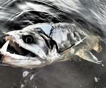 釣具メーカー社員が道具の選び方から裏話まで教えます なかなか出てこない釣業界の「ホントのところ」を知りたい方へ