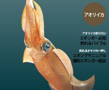 エギングをお教えいたします!キャスティングのエギング船を日本で一番最初に運営した海人です。