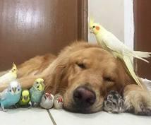 愛鳥(セキセイ)さんのお悩み解決します インコを飼育している中のお悩みや心配点など◡̈*♡