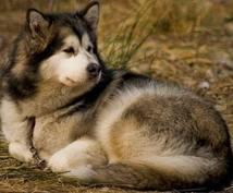 行方不明◆捜索◆かわいいペット探しのお手伝いします ヒントを元に自力で探したいあなたへ