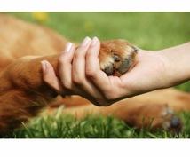 動物専門!あなたのペットの気持ちをお伝えします 『飼い主さんとお話したい!』を叶えます。