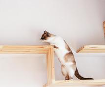 あなたにピッタリの猫カフェ教えます どこに行こうか迷ってる方向け(大阪・京都メイン)